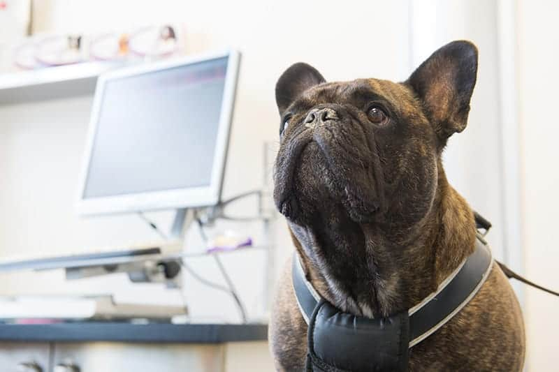 EEG u psa