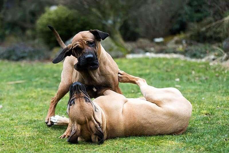 Psy uczą się od siebie