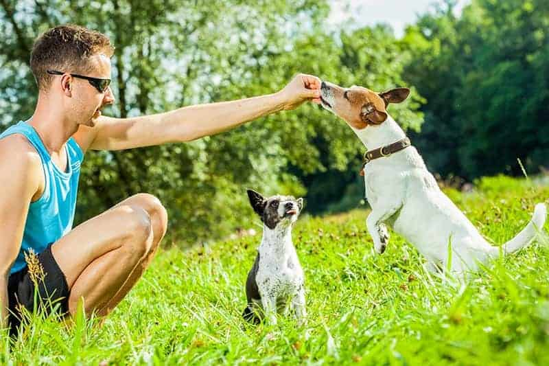 Trening z dwoma psami