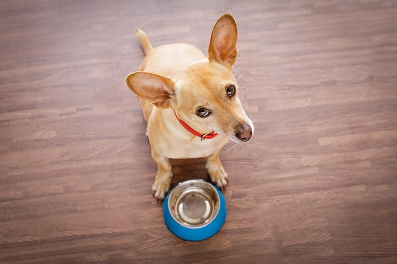 Jak i kiedy karmić psa?