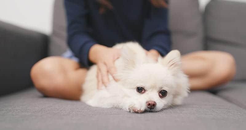 Masaż dla psa