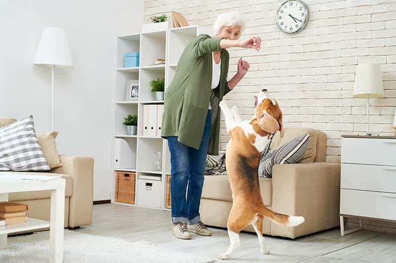 Jak pracować z nadpobudliwym psem?