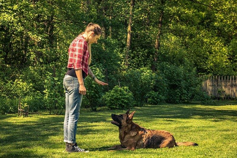 Trening z nadpobudliwym psem