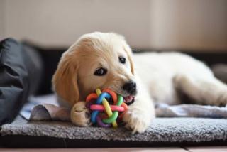 Gadżety dla psa