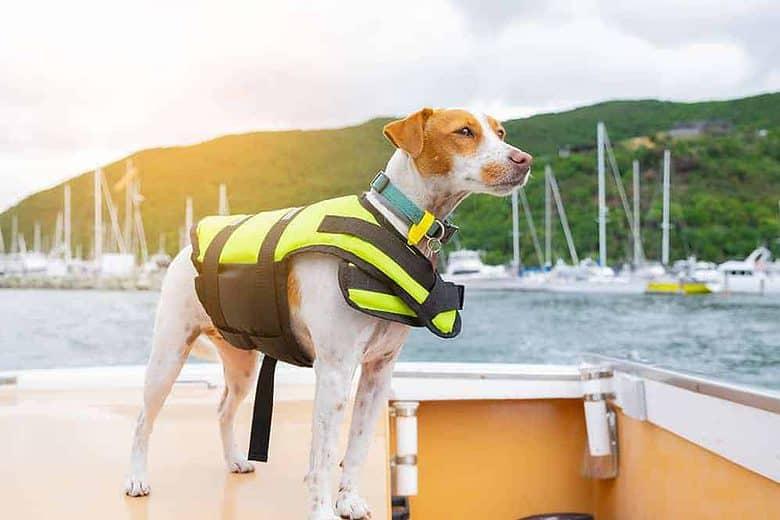 Kamizelka ratunkowa dla psa