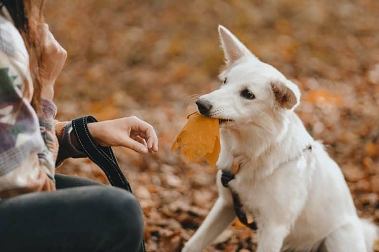 Jak rozwinąć inteligencję psa?