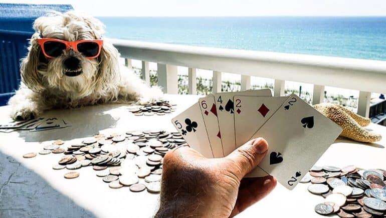 Zagraj z psem w karty