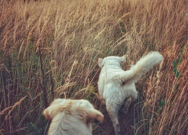 Tropienie dla początkujących psów