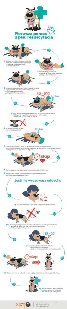 Pierwsza pomoc u psa - resuscytacja