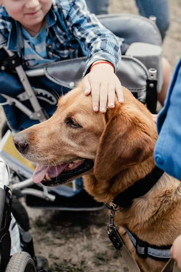Dogoterapia: rodzaje, historia i zalety [zalecenia behawiorysty] ⋆ co w sierści piszczy