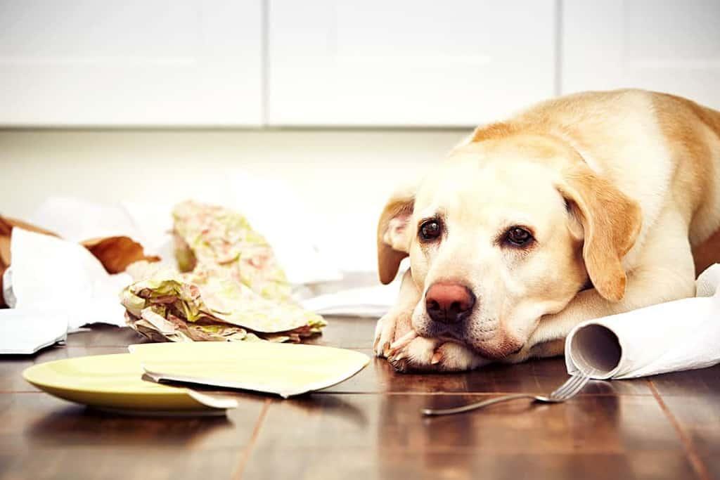 Zachowanie psa