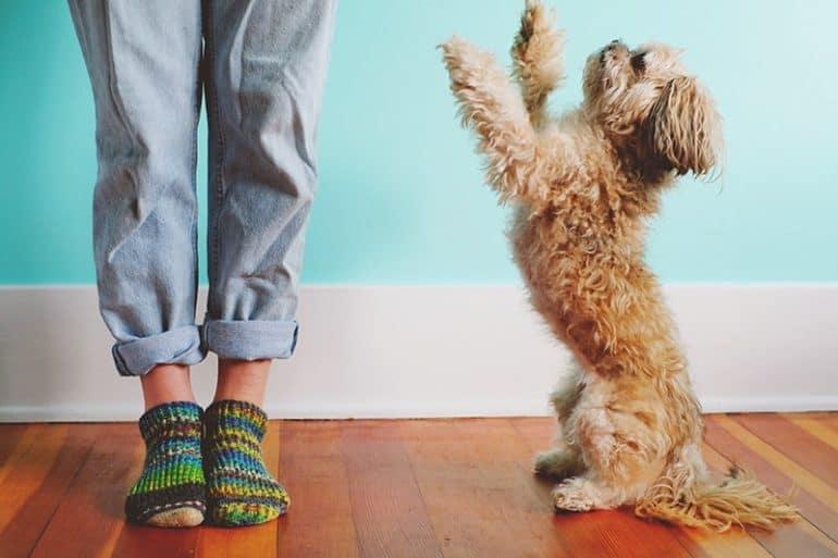 Dlaczego pies skacze na ludzi