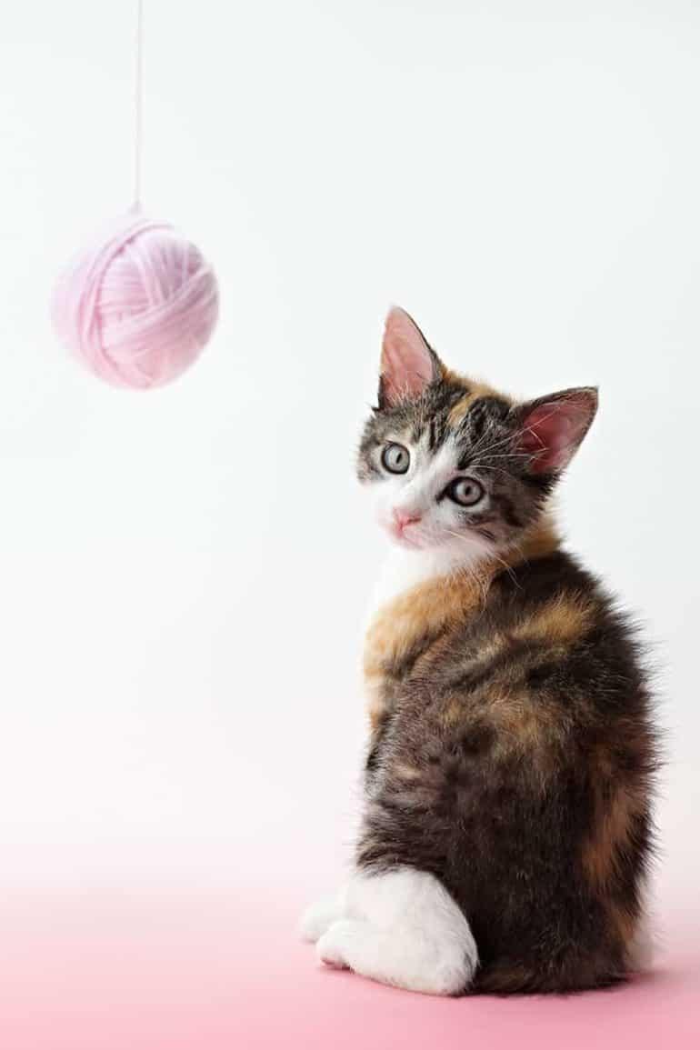 Jak bawić się z kotem?