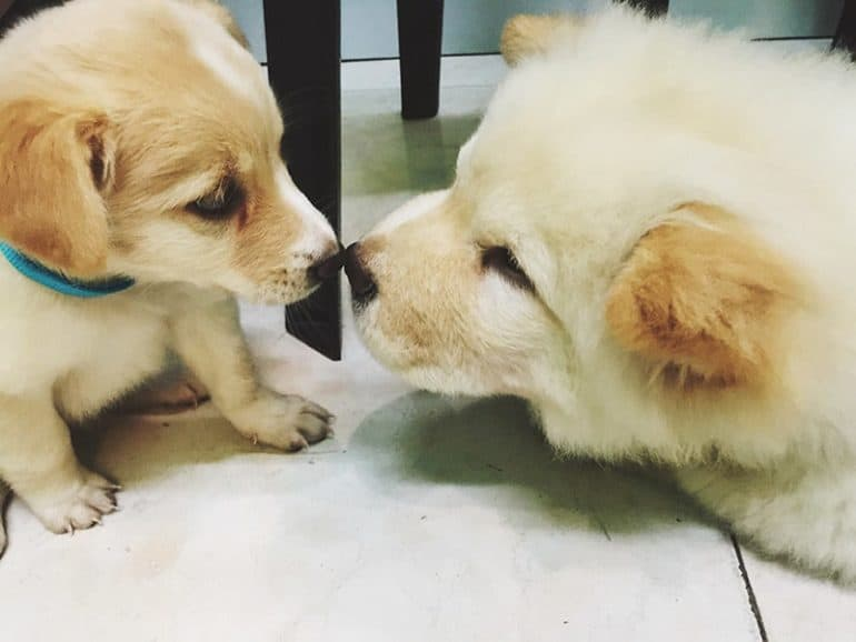 W jakich sytuacjach zapoznajemy ze sobą psy?