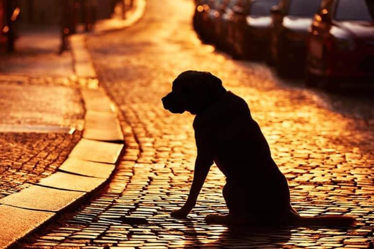 Zabezpiecz znalezionego psa