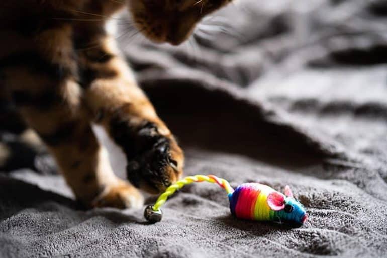 Koty jako urodzeni drapieżcy