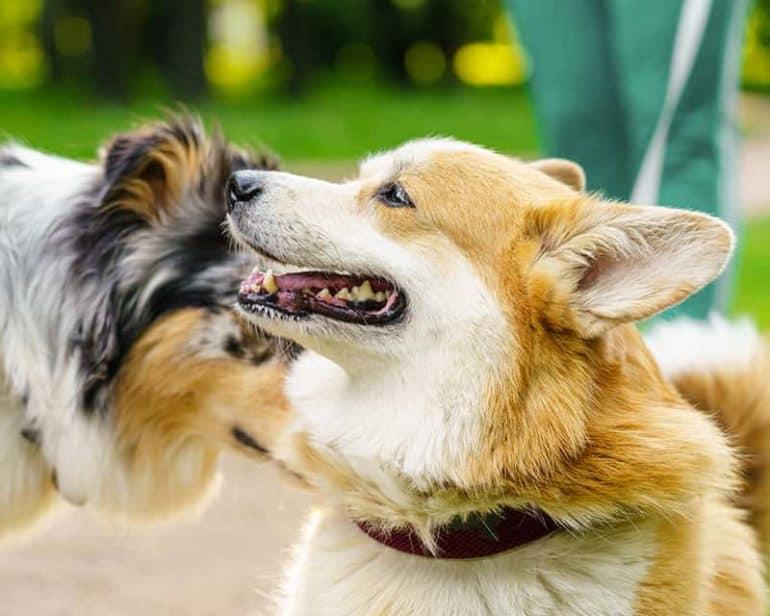 Kiedy łączymy psy?