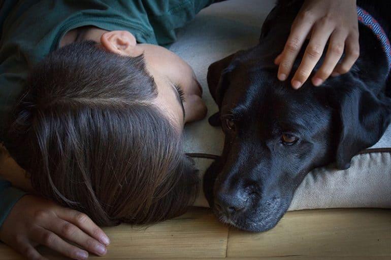 Zasady obcowania z psem