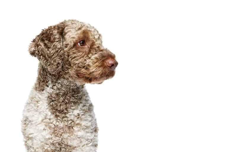 Jak psy pomagają ludziom? ⋆ co w sierści piszczy