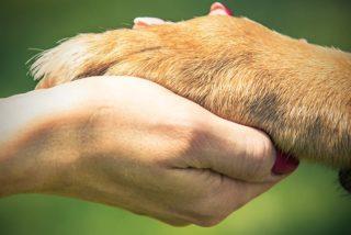 Jak psy pomagają ludziom?