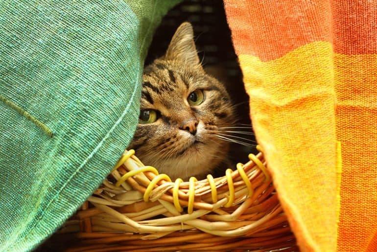 Miejsca schronienia i odpoczynku kota