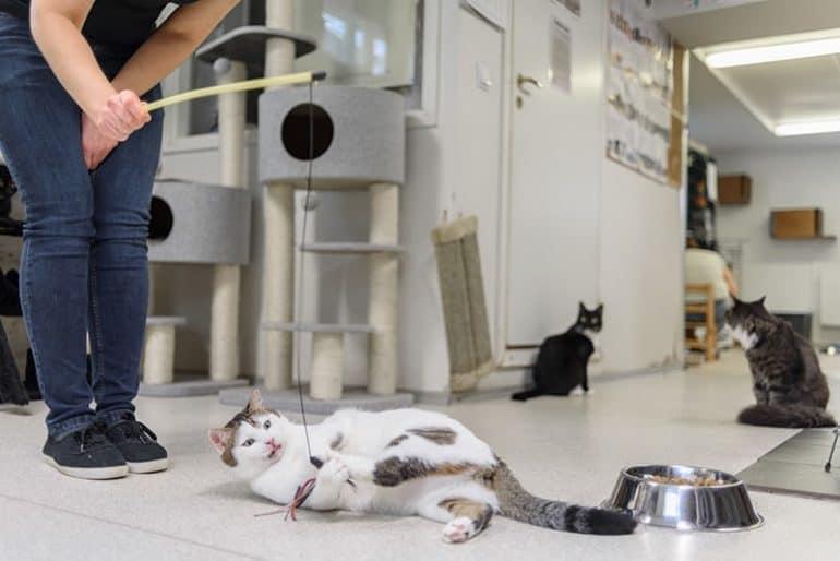 Miejsce dla kota w mieszkaniu