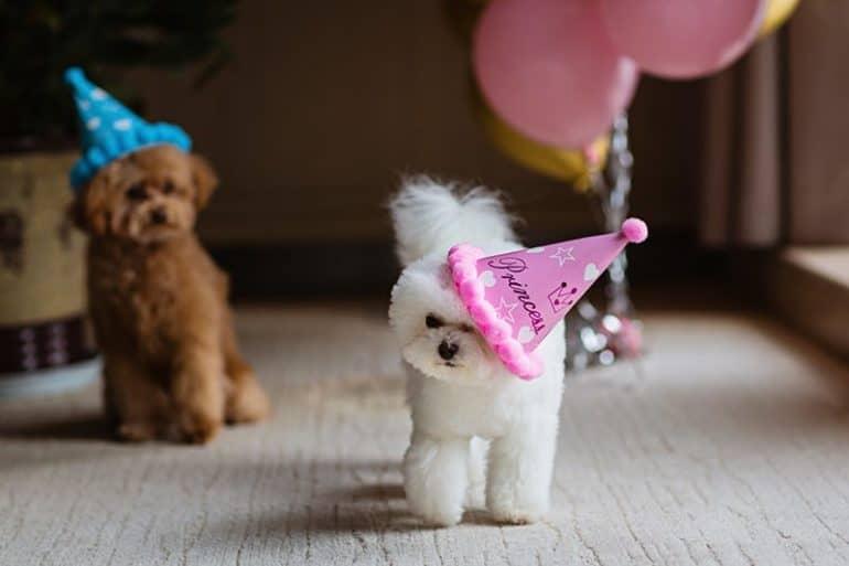 Mały pies to nie zabawka!